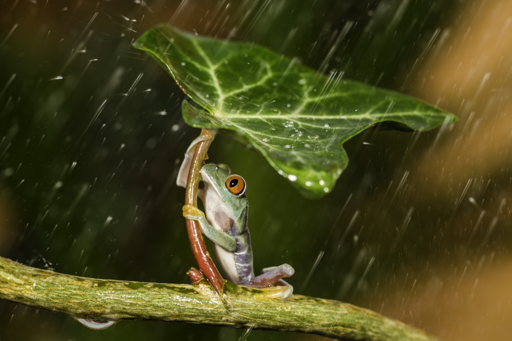 A piece of fine art art photography titled Ohh Noo :( It's Raining by Kutub Uddin