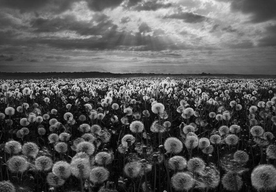 A piece of fine art art photography titled Dandelion\'s Day by Lilia Rasnovskaya