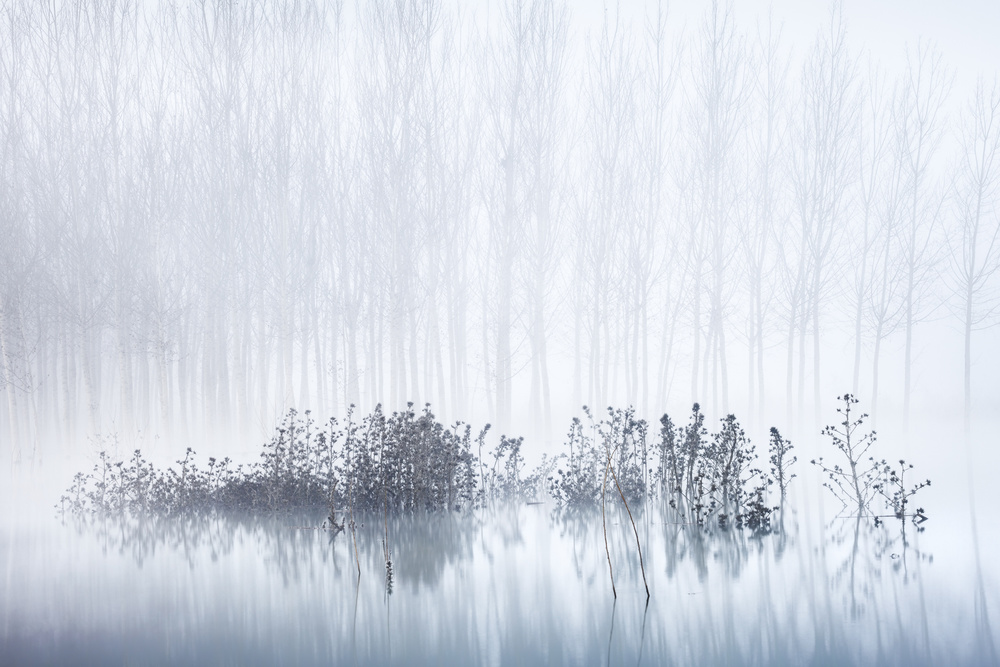 A piece of fine art art photography titled Cold & Foggy Morning In the Swamp by David Frutos