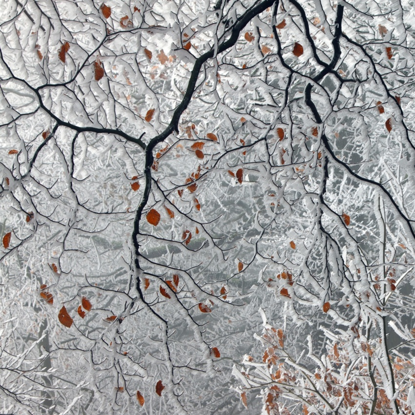 A piece of fine art art photography titled Last Leaves by Martin Rak