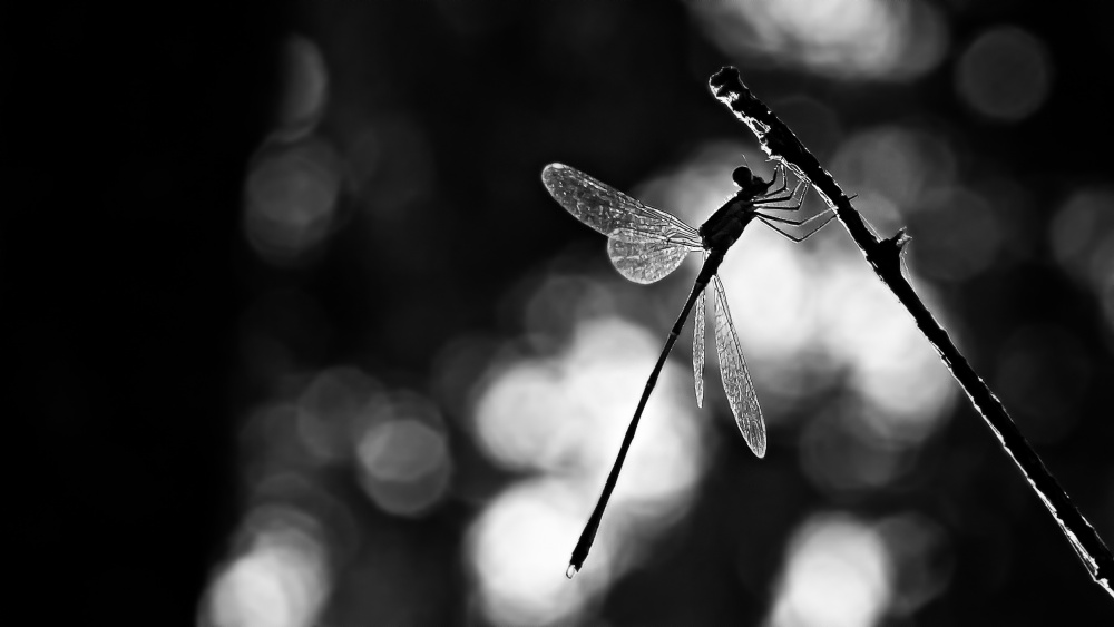 A piece of fine art art photography titled Dragonfly by Light by Rui Ribeiro