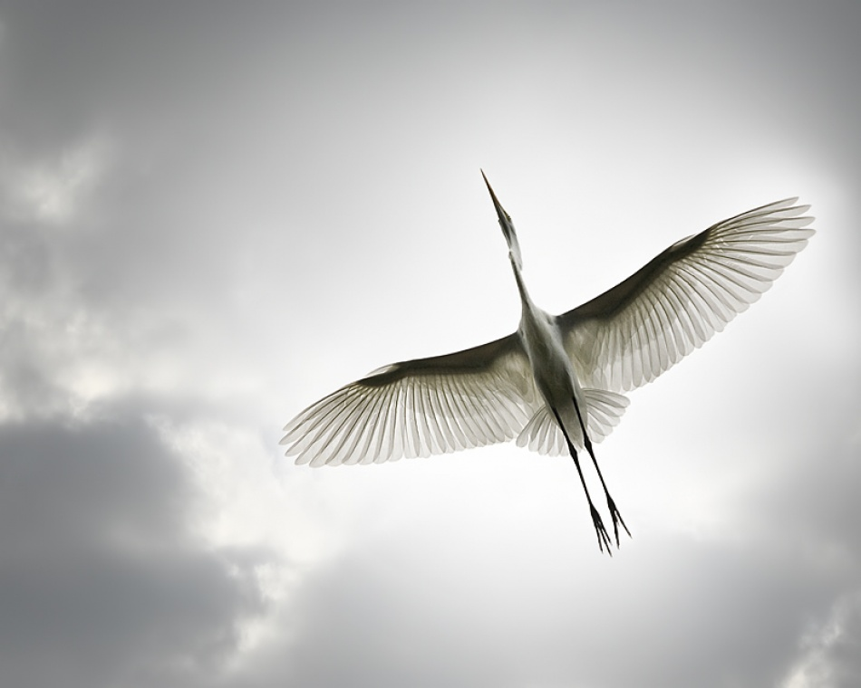 A piece of fine art art photography titled Avian Angel by Sandy Powers