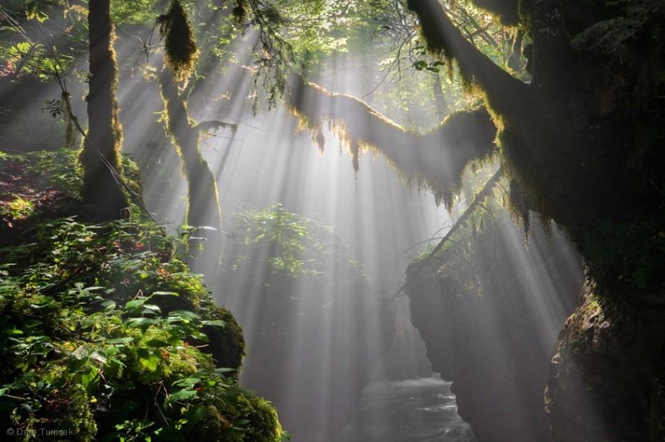 Call of wilderness ...
