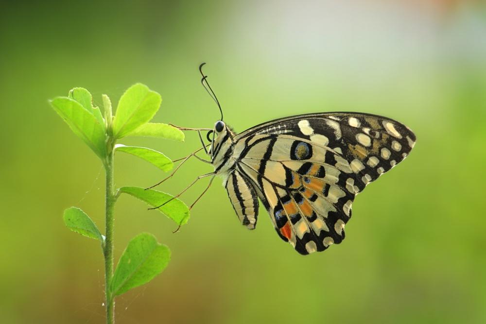A piece of fine art art photography titled Batik Butterfly by ALFIAN ISMAIL