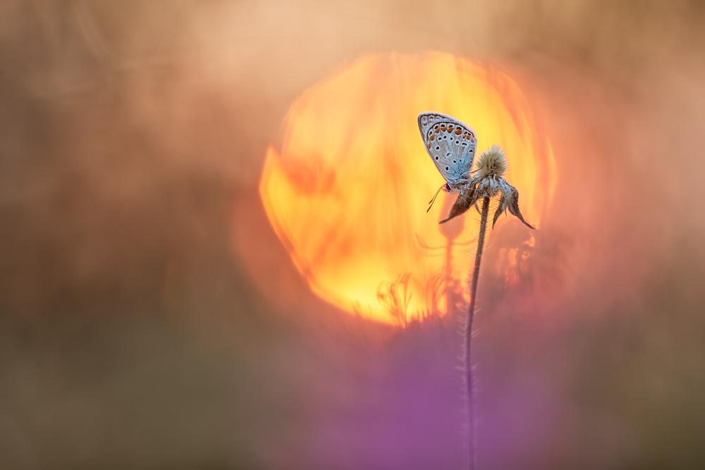 A piece of fine art art photography titled Ball of Fire by Henrik Spranz