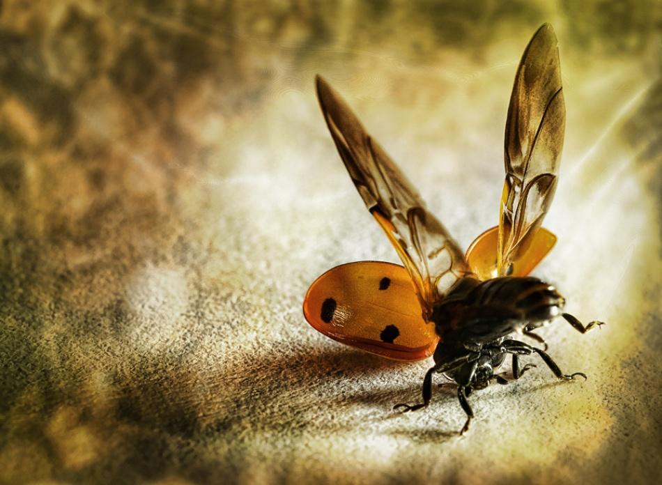 A piece of fine art art photography titled Lady Bug Acrobat by Bernadette Heemskerk