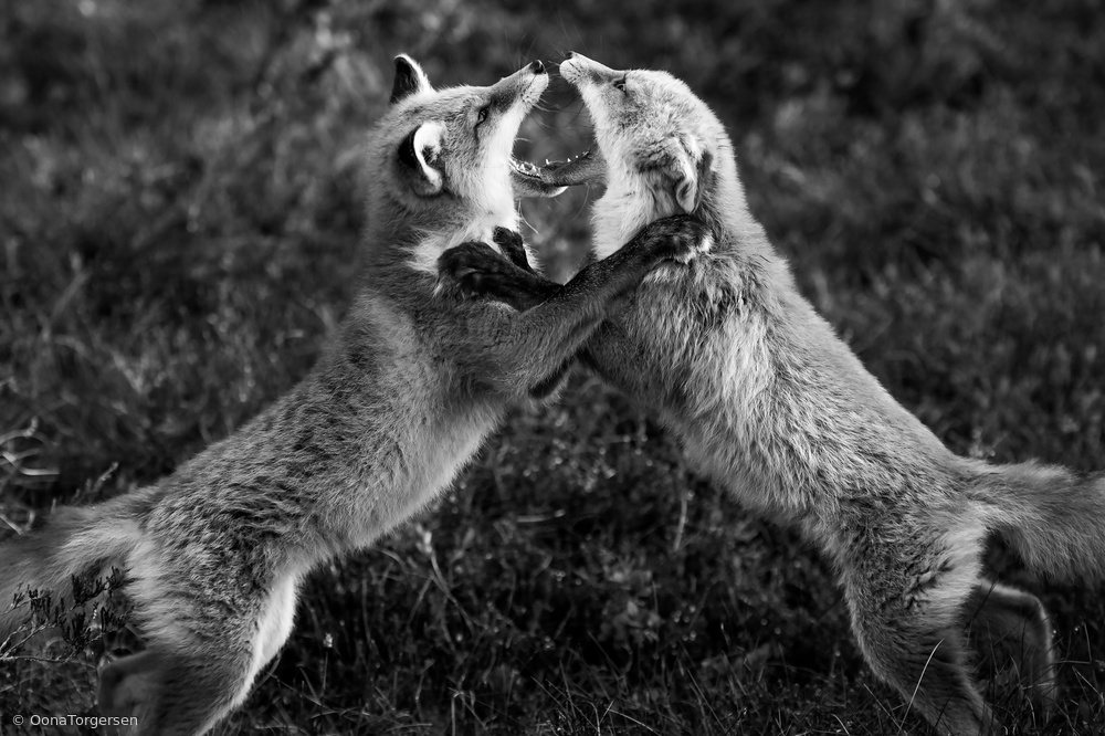 The Fight!