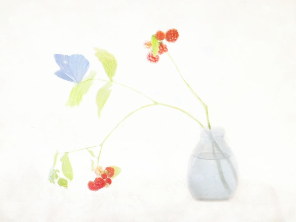 A piece of fine art art photography titled Botanic by Delphine Devos