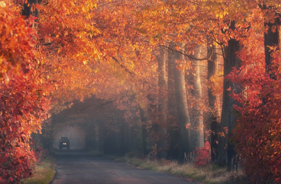 A piece of fine art art photography titled Autumn With Tractor by Pawel Uchorczak