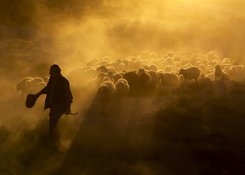 View this piece of fine art photography titled sheepherd by Santiago Pascual Buye