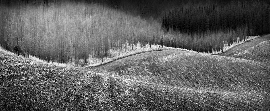 A piece of fine art art photography titled Field Margin by Clive Collie