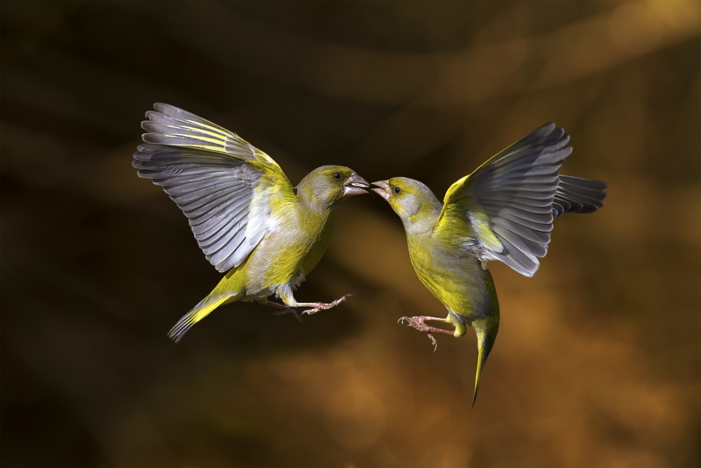 A piece of fine art art photography titled Flying Kiss 19 by Marco Redaelli