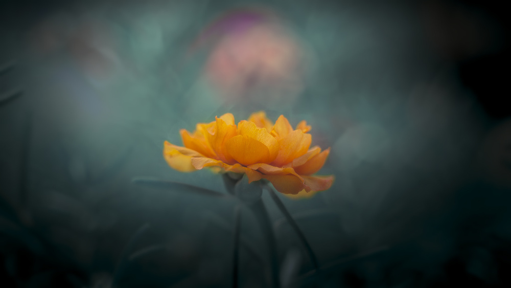 A piece of fine art art photography titled Yellow by Sabriamin M