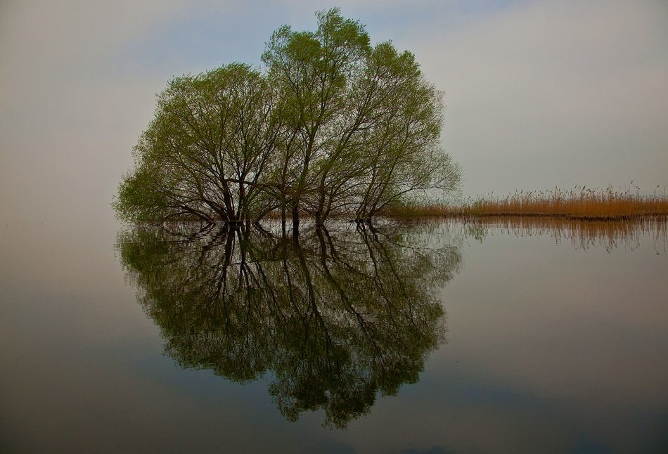 A piece of fine art art photography titled Reflections by Omer Gencal
