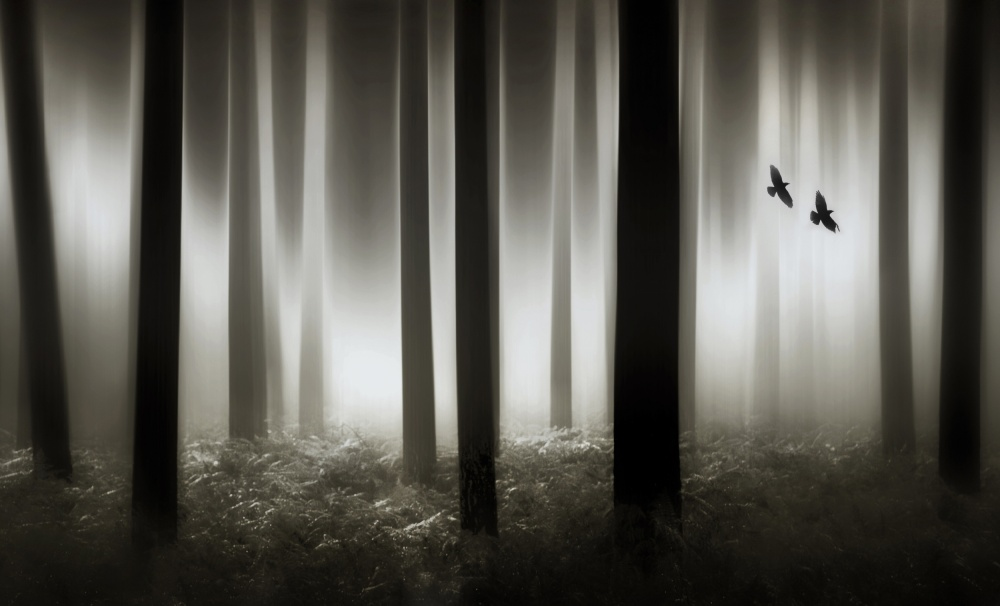 A piece of fine art art photography titled Duo Flight by Marc Apers