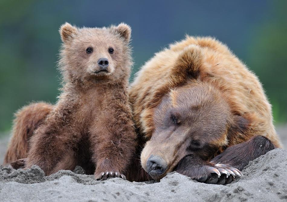 Guarding Mom's sleep