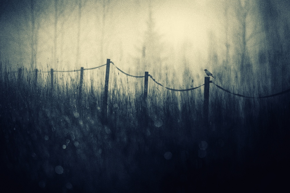 A piece of fine art art photography titled Raven's Day by Mika Suutari