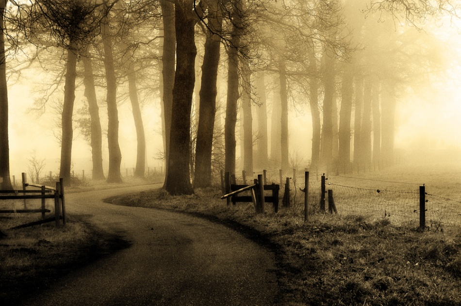 A piece of fine art art photography titled Road to Nowhere by Petra Oldeman