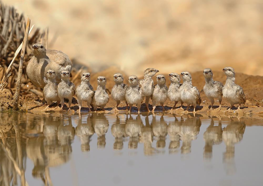 A piece of fine art art photography titled Partridge Family by Shlomo Waldmann