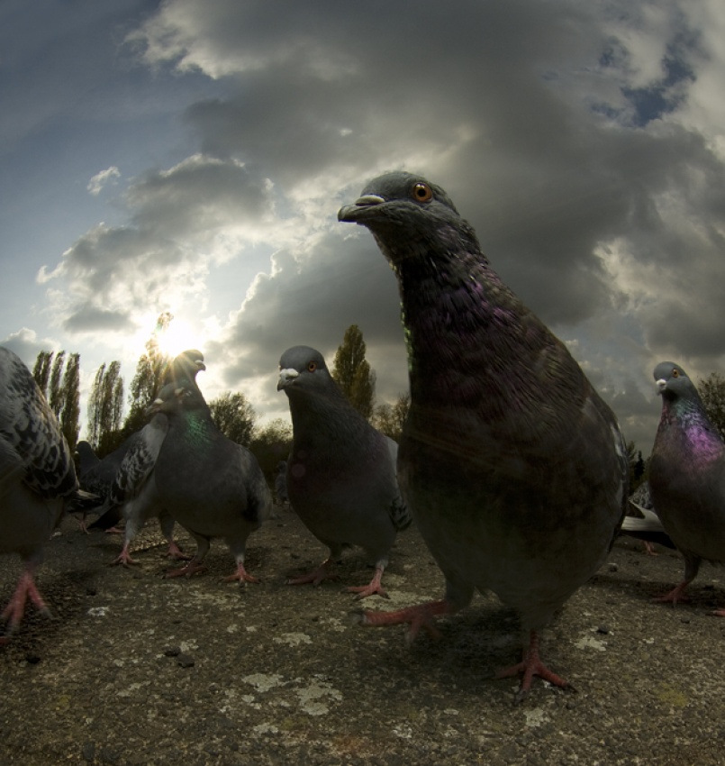 A piece of fine art art photography titled Brockwell Pigeons by simondeg