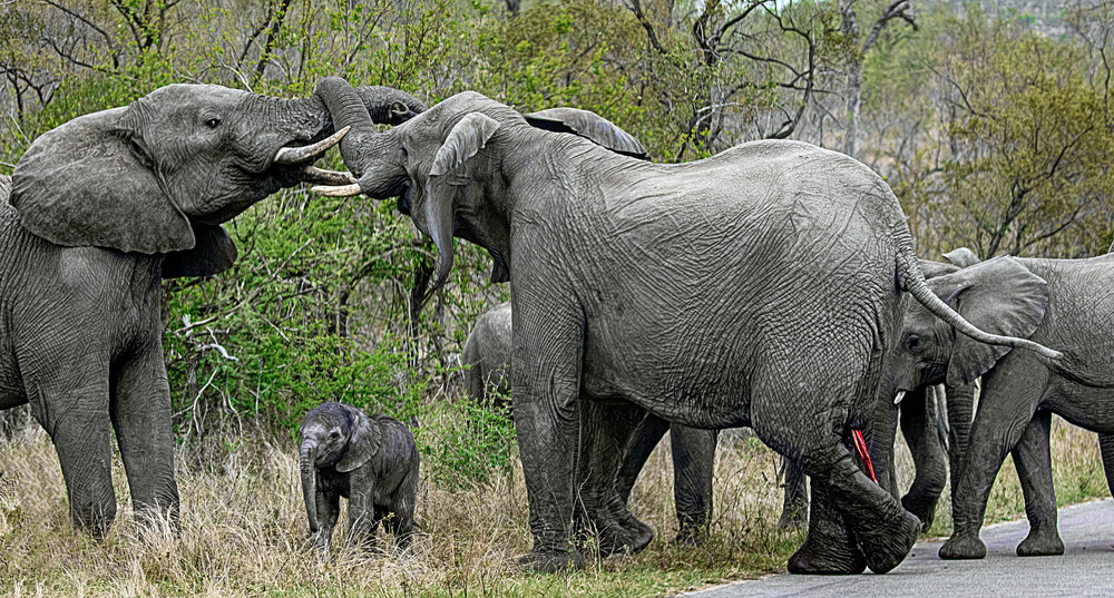 A piece of fine art art photography titled New-Born Elephant In the Thick of Things by Lourens Durand