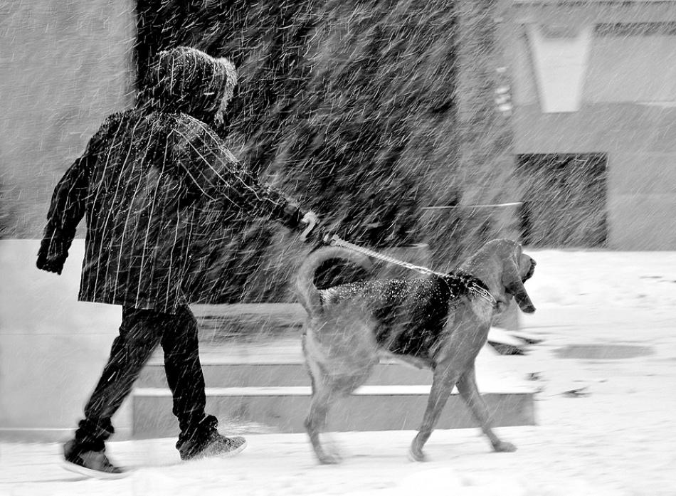 A piece of fine art art photography titled Winter Walk by Jasmina Gorjanski