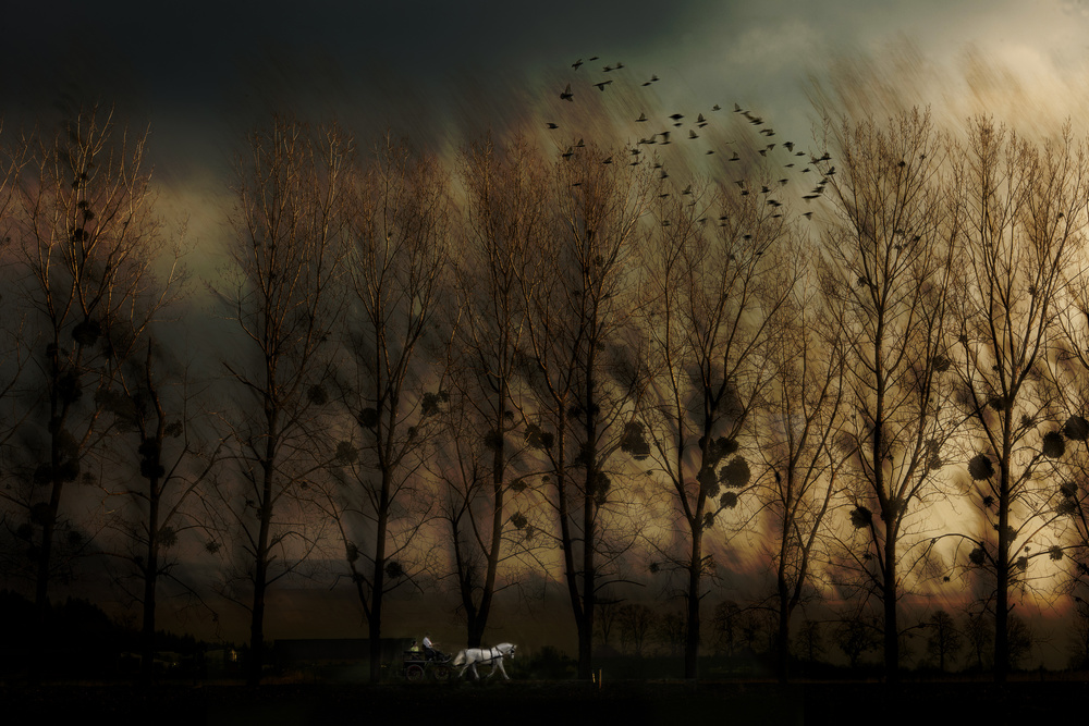 A piece of fine art art photography titled Mystical  Route by milan malovrh