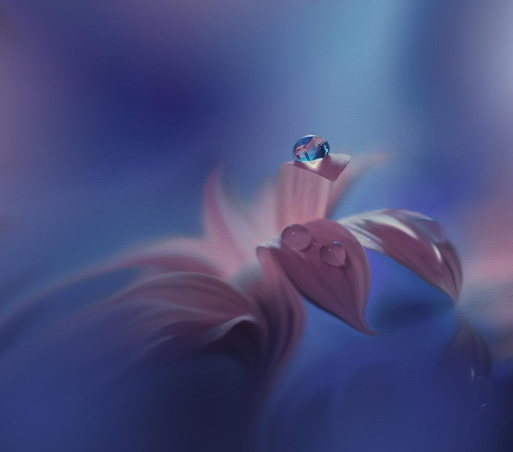 A piece of fine art art photography titled Purple Wind by Juliana Nan