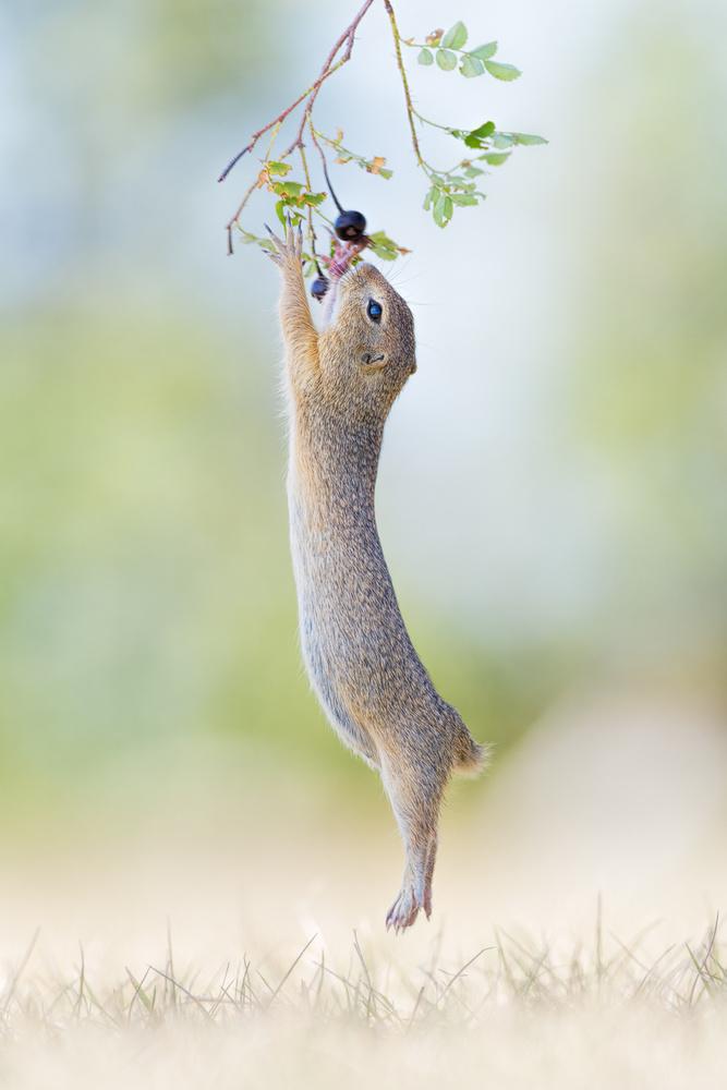 A piece of fine art art photography titled Stretch Jump by Henrik Spranz