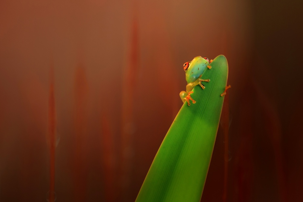 A piece of fine art art photography titled Hiding by Wil Mijer