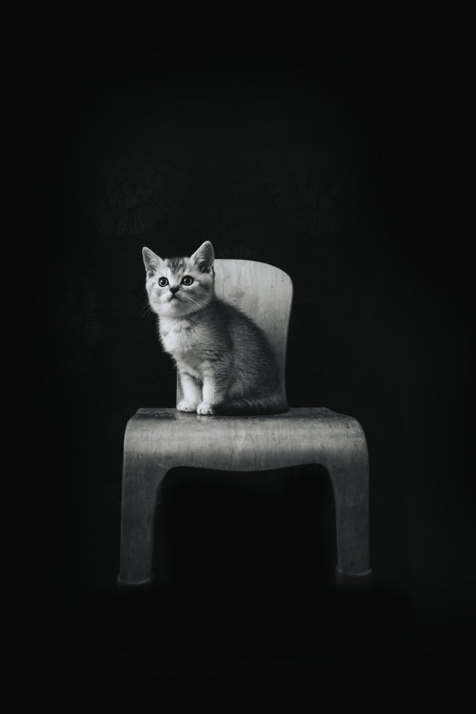 View this piece of fine art photography titled ... ::: The Cat ::: ... by sara jazbar
