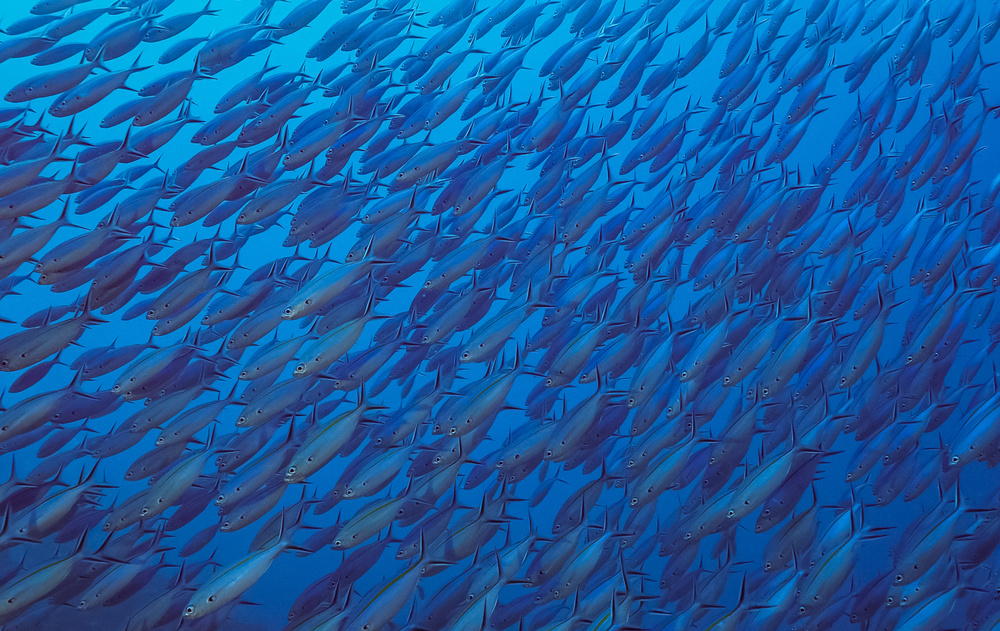 View this piece of fine art photography titled School of fish by Serge Melesan