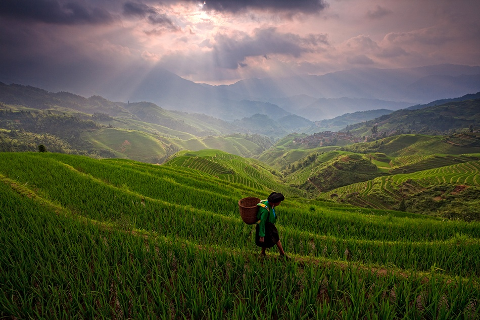 A piece of fine art art photography titled Longji Rice Terrace by Helminadia Ranford