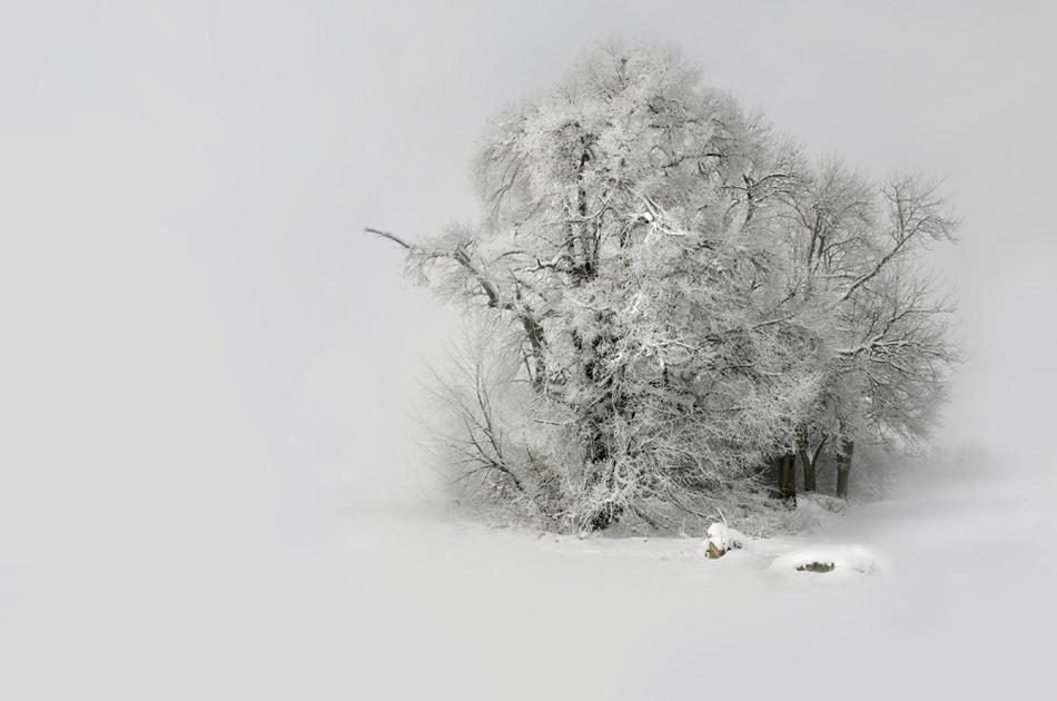 A piece of fine art art photography titled Winter Filigran_Winter Filigree by Nicolas Schumacher