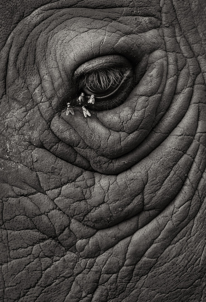 A piece of fine art art photography titled Remembering Rhinos by Marsel van Oosten