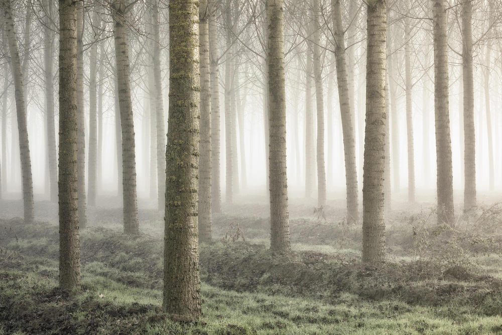 A piece of fine art art photography titled Small Woodland by Fiorenzo Carozzi