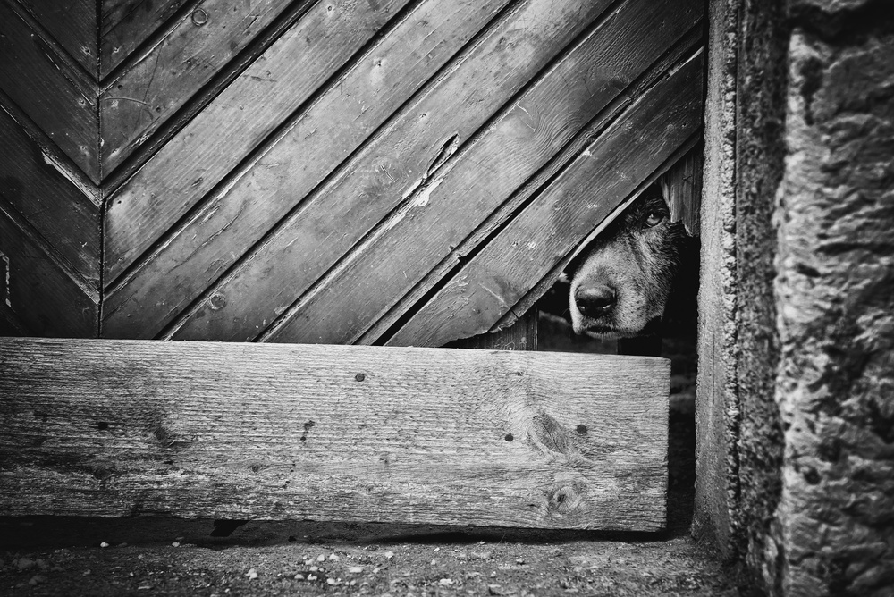 A piece of fine art art photography titled A Very Sad Dog by Tamara Brnelić