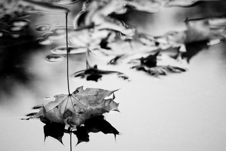 A piece of fine art art photography titled Bittersweet October by alexis dela cruz