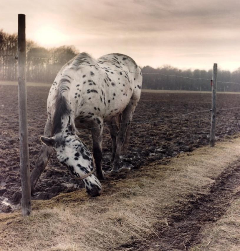 Pippis horse