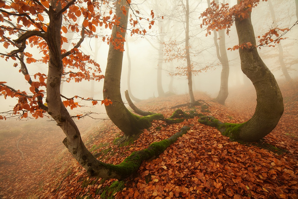 A piece of fine art art photography titled Autumn Octopus In the Ore Mountains by Daniel Řeřicha