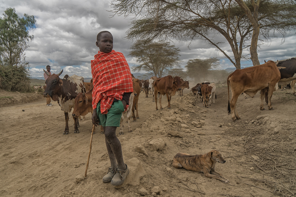 View this piece of fine art photography titled Young shepherd by Lior Yaakobi