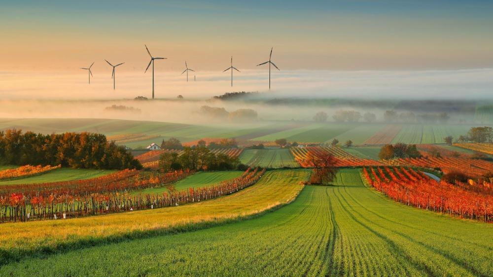 Autumn Atmosphere in Vineyards
