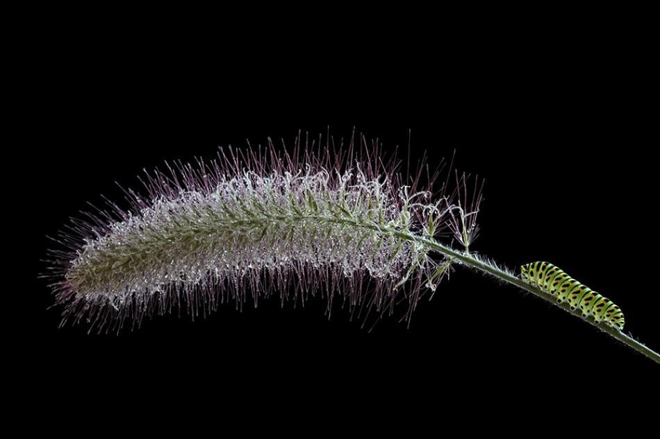A piece of fine art art photography titled Caterpillar by Theo Vanden Wyngaert