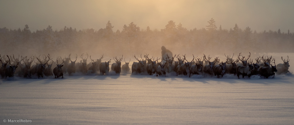 The herd II
