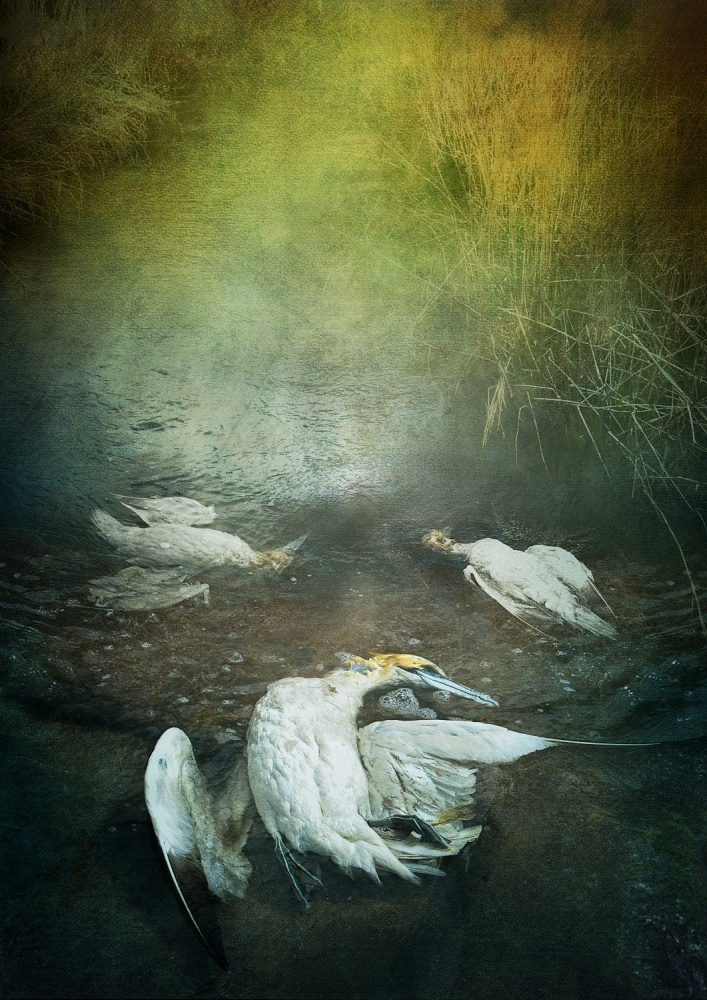 A piece of fine art art photography titled Herons by Lucyna Łazarska  ( Lucynda Lu )