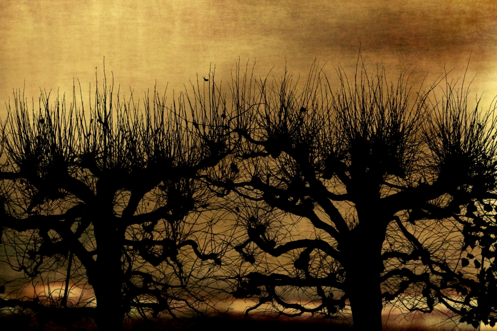 A piece of fine art art photography titled The Remains of the Day by Anja Buehrer