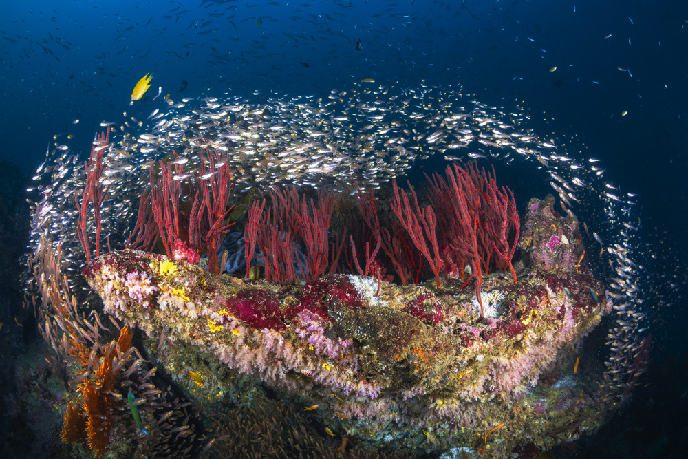 View this piece of fine art photography titled Life of Reef by Barathieu Gabriel