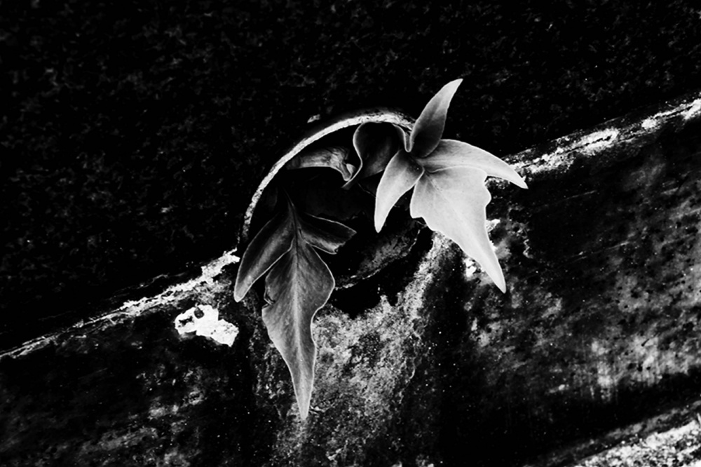 A piece of fine art art photography titled Symbiosis55 by Osamu Jinguji
