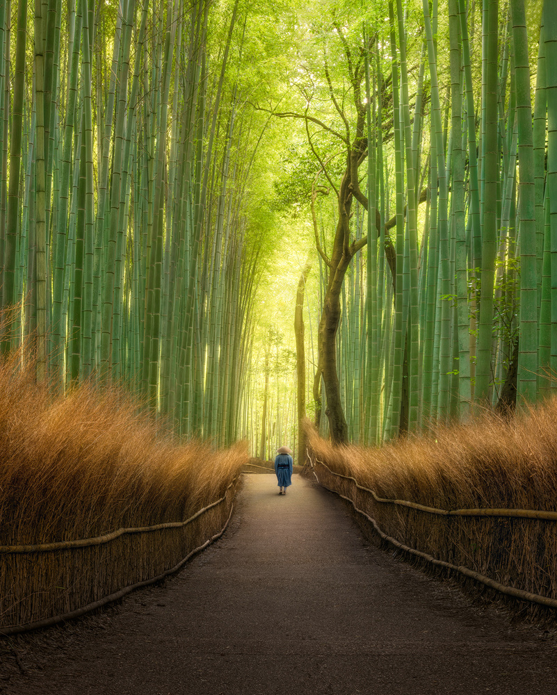 A piece of fine art art photography titled Arashiyama Bamboo Alley by Wenmin Zhang