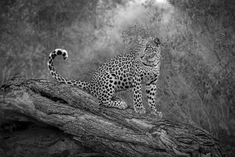 A piece of fine art art photography titled Sabi by Marsel van Oosten